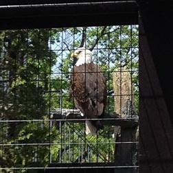 大きな新居に引っ越しした白頭鷲は見つけにくくなっていた…